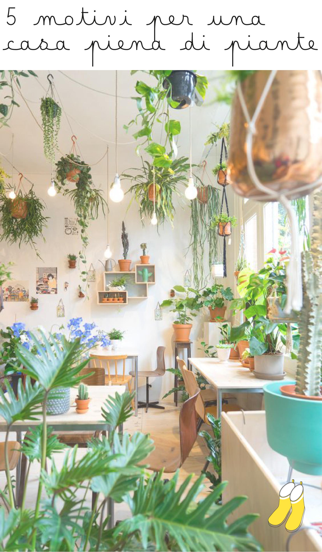 5 motivi per una casa piena di piante
