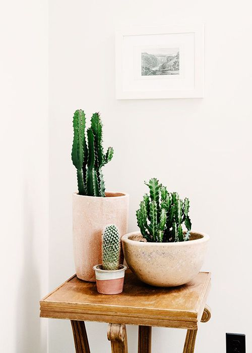 piante grasse laurenconrad.com