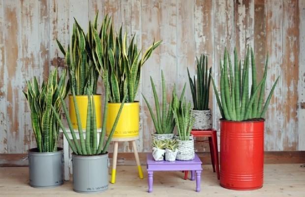 piante-in-appartamento