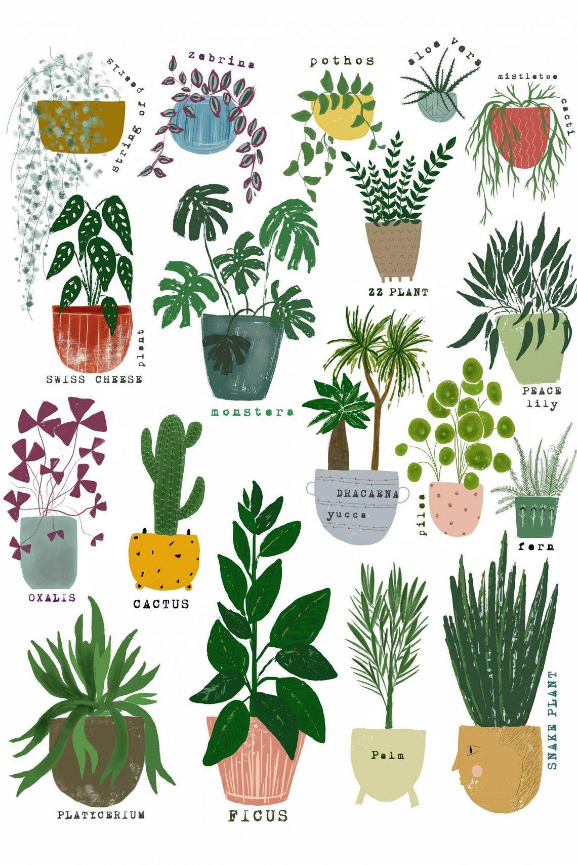 Piante Da Arredo Appartamento una casa naturale: le piante e i loro super poteri per