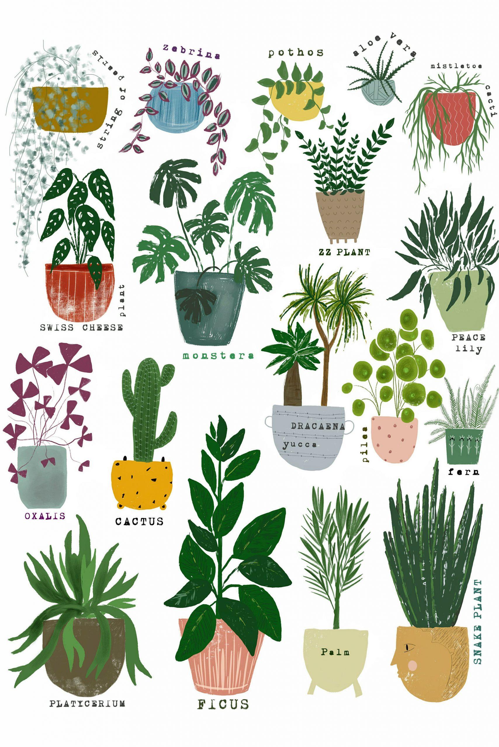 Tronchetto Della Felicità Da Esterno una casa naturale: le piante e i loro super poteri per